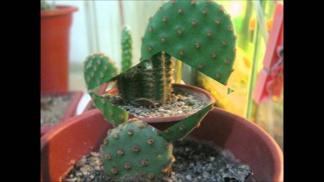 cactus y suculentas con sus nombres 2012