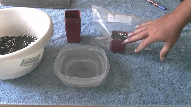 Growing cacti from seed.