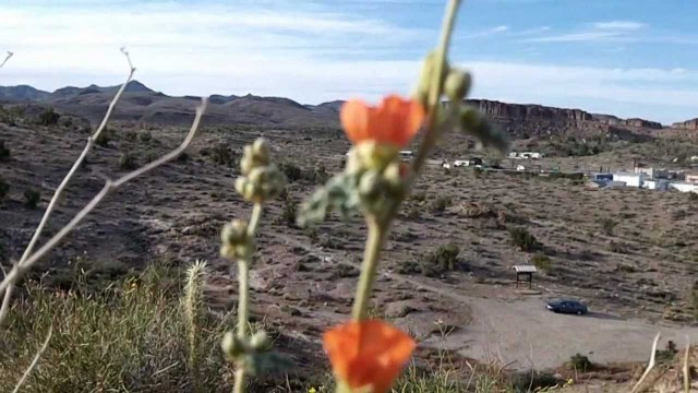 Arizona Desert Garden Hiking Trail ~ Kingman AZ
