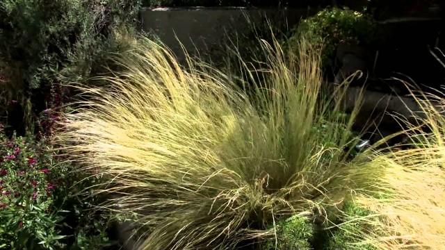 Sensory Garden, UTEP Centennial Museum Chihuahuan Desert Garden