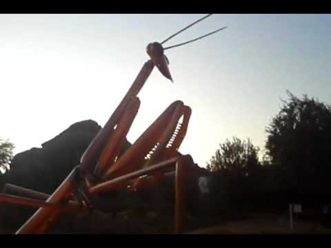 Giant Praying Mantis at Desert Botanical Gardens
