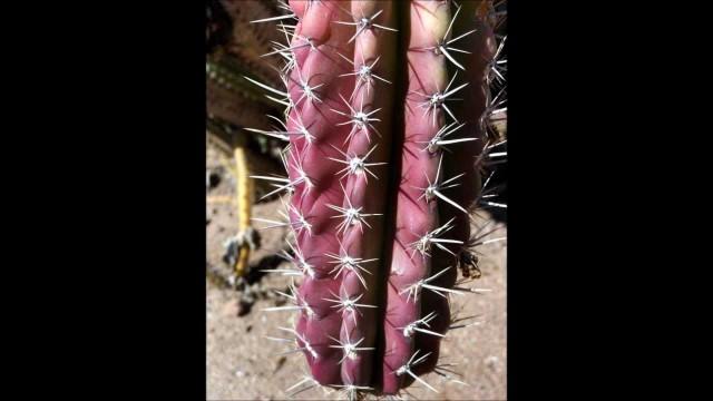 Desert Botanical Garden – Realism in Phoenix, Arizona
