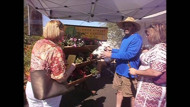 The Phoenix Desert Botanical Gardens Plant Sale