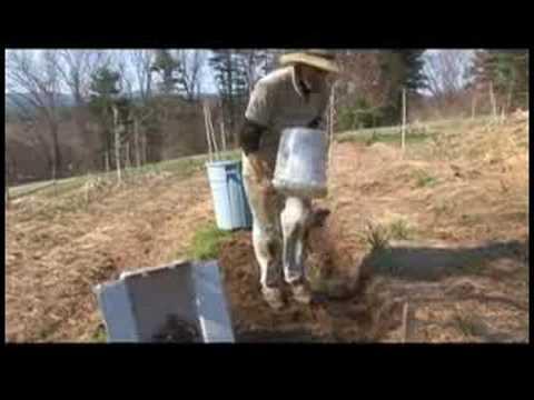 Planting a Spring Garden : Planting Spring Gardens: Potatoes