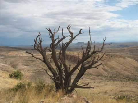 Ocotillo Hikers – Trees of the High Desert Landscape