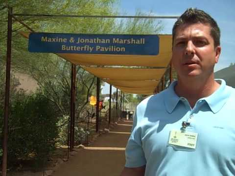 Butterflies arrive at Desert Botanical Garden