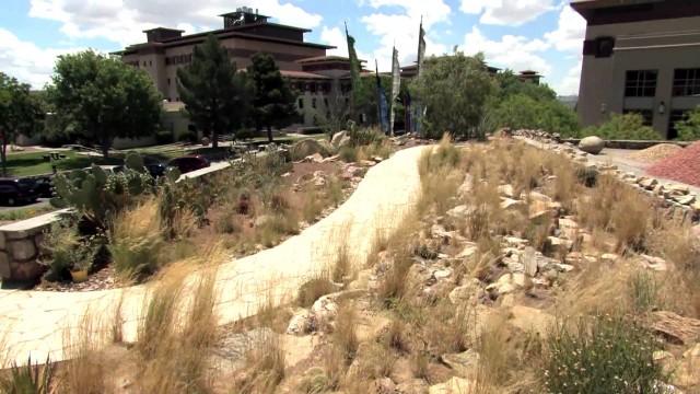 Cactus Garden, UTEP Centennial Museum Chihuahuan Desert Garden