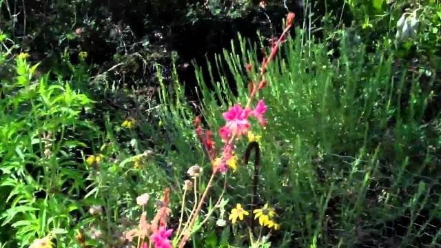 Desert Botanical Park, Phoenix, AZ