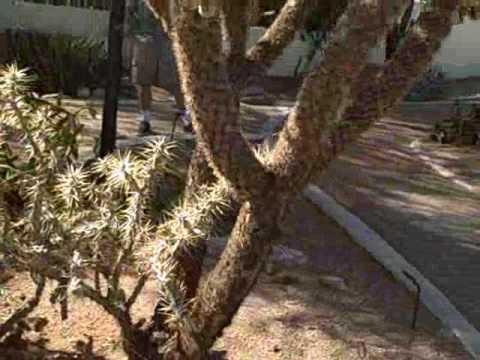 Brinton Desert Botanical Garden (Mesa, AZ)