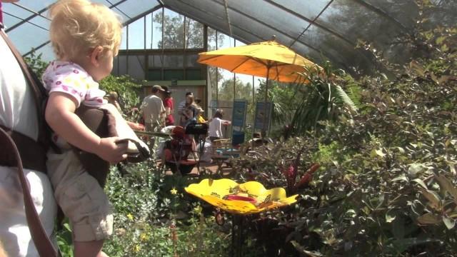 Jamie Zissis Desert Botanical Gardens Butterfly Exhibit.mov