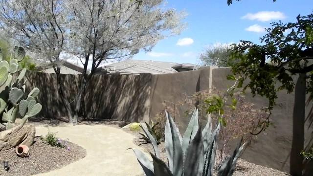 Schocket/Sparber Desert Garden