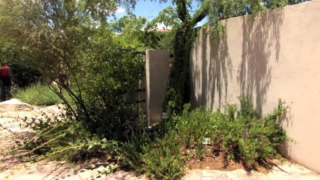 Assembly Garden, UTEP Centennial Museum Chihuahuan Desert Garden