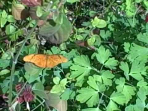 Desert Botanical Gardens 3-09-09 Butterfl