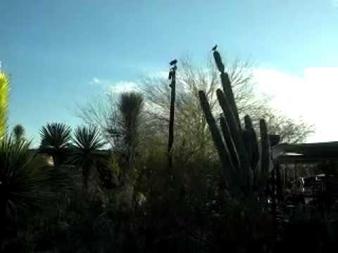 Phoenix Botanical Garden Chihouli Installation