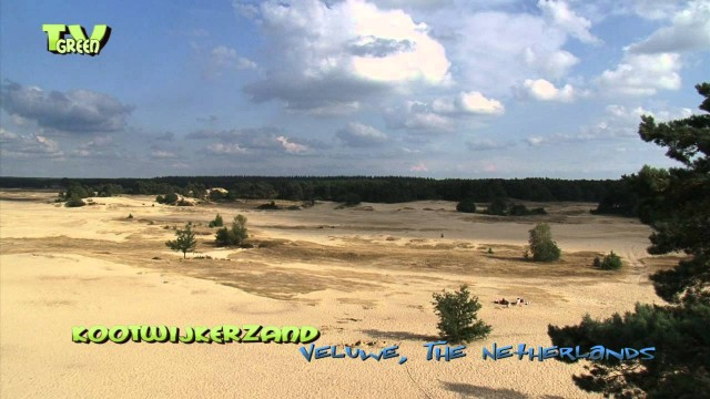 Nature Notes – Kootwijkerzand – stuifzand – Dutch Desert landscape