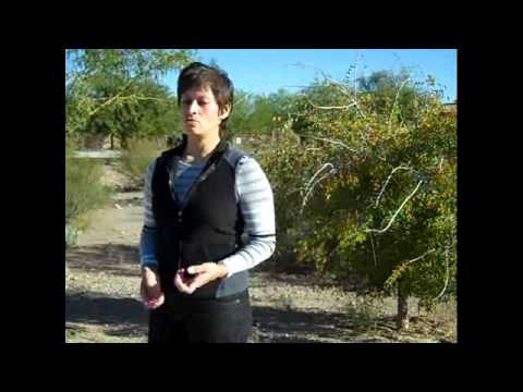 Organic Weed Control for Desert Landscapes video.wmv