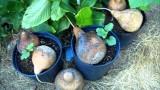 Garden Diary Update Container Gardening