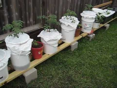 Self-Watering Container Gardening System: Richard's Garden