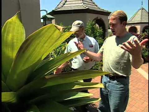 Southwest Parks and Gardens – Denver Botanic Gardens – Container Gardening