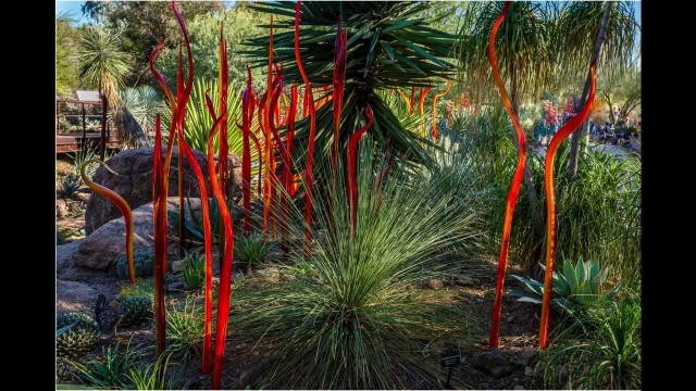 Dale Chihuly at the Desert Botanical Garden Phoenix  01.2014
