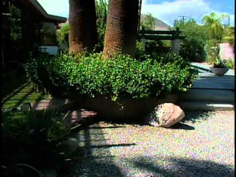 Southwest Xeriscapes – California – Sharon O'Donnell