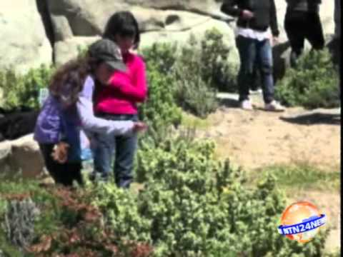 A rare blossoming of Chile's desert garden.wmv