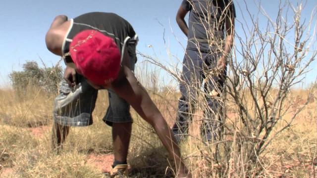 KIMBERLEY ENVIRONMENTAL HORTICULTURE TANAMI DESERT EXPEDITION
