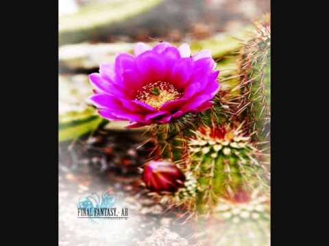 Final Fantasy AR (Ashen Reverie) – Desert Garden (FM)