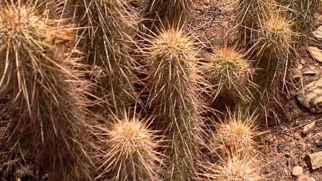 Desert Cacti Study – Arizona , U.S.A.