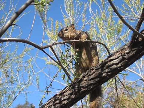 Friendly squirrel eating @ Desert Botanical Garden