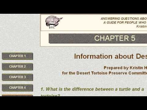 What Does A Sonoran Desert Tortoise Eat?