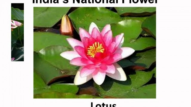 Science – Plant Habitat and adaptation – Telugu