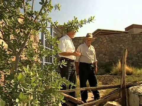 Desert Plants Desert Gardening and Xeriscaping