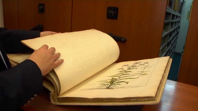 The New York Botanical Garden: Mertz Library Tour