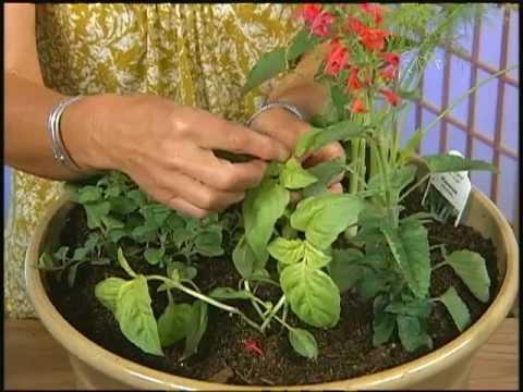 Desert Gardening: Herbs (with Carol Stuttard)