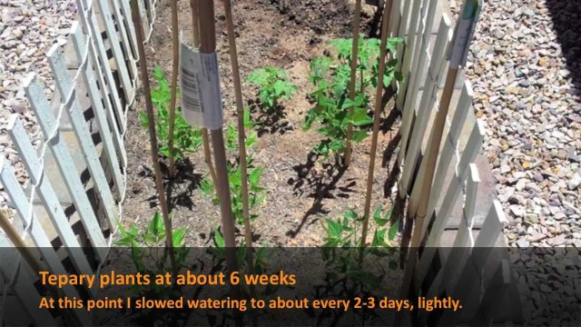 Raised Garden Experiment p1