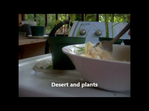 Desert and Plants.
