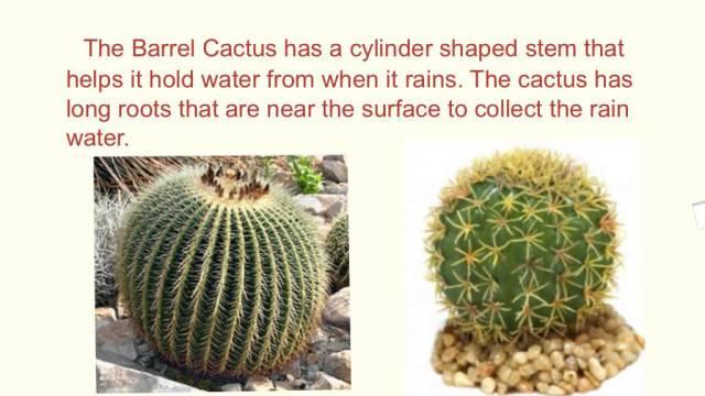 desert plants-5c