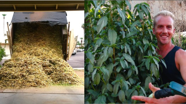 Amazing EDIBLE GARDEN & TREES Using WOOD CHIPS