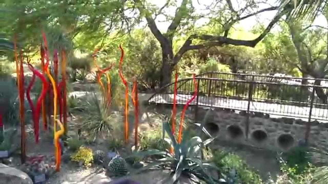 Desert Botanical Garden, Phoenix, AZ ~ Chihuly blown glass art