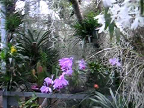 Deep in the jungle – Heidelberg`s botanical garden