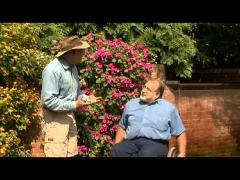 Garden Travels – Enabling Garden / Butterflies