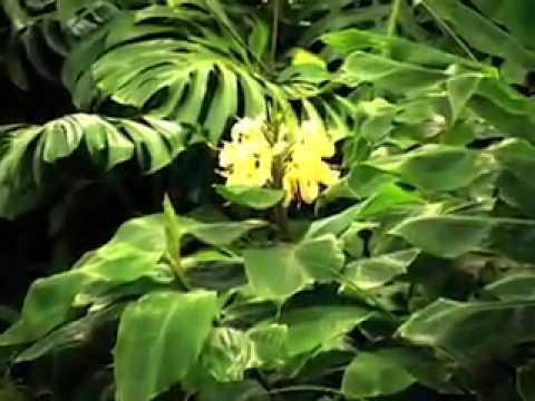sacred maui:kula botanical garden