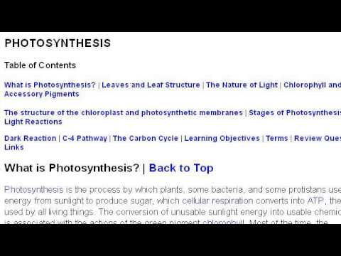The Stages That Desert Plants Go Through In Photosynthesis