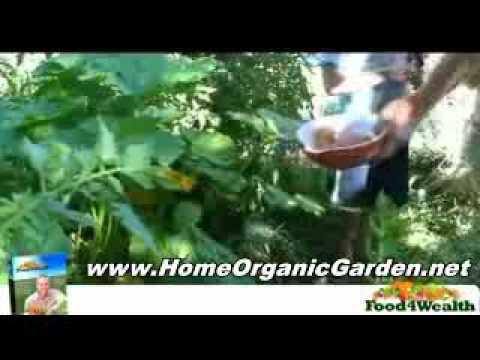 Fall Organic Garden Preparation