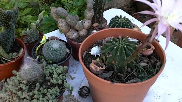 Cactus Lindos con Flores | Videos de Jardin | Plantas Crasas | Cactus Flowers