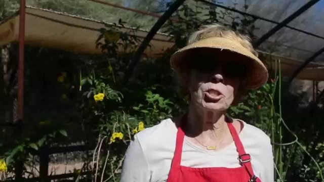 Martha Mosley – Mariposa Monarca Butterfly Exhibit