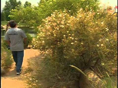 Southwest Parks and Gardens – Rio Grande Botanic Garden