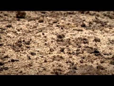 vlcrecord-2013-05-16-15h06m58s-Africas Desert Garden.flv-