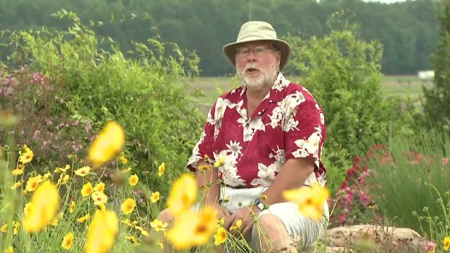Hot and Dry Landscapes – Southern Gardening TV